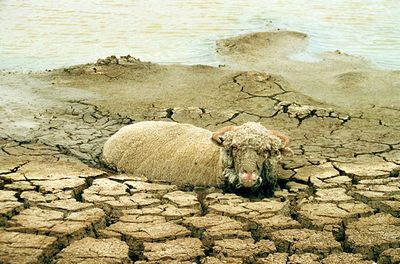 オーストラリアの干ばつ08