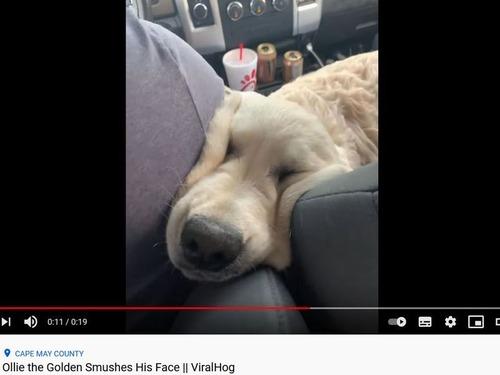 顔がやわらかい犬