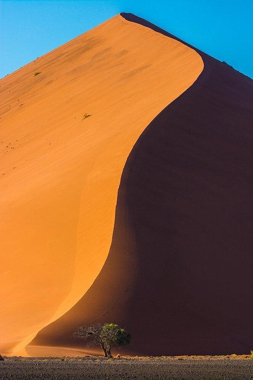 ナミブ砂漠のDune4501