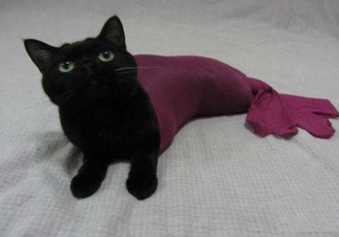 人魚猫04