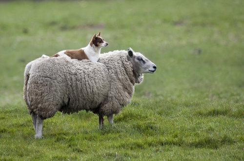 羊飼いの楽しみ10