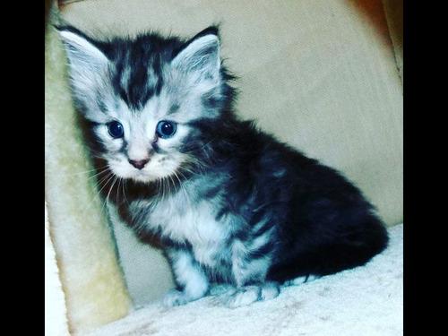 猫のしっぽが世界記録に00