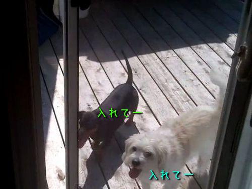 犬の自動ドアをDIY00