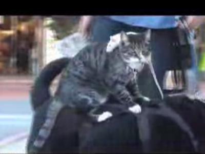 犬に猫が乗り、猫の上には…ネズミ!?