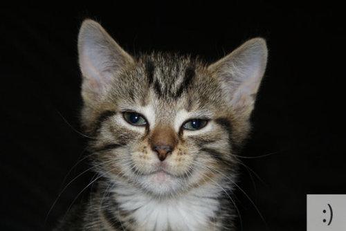 猫の顔文字12