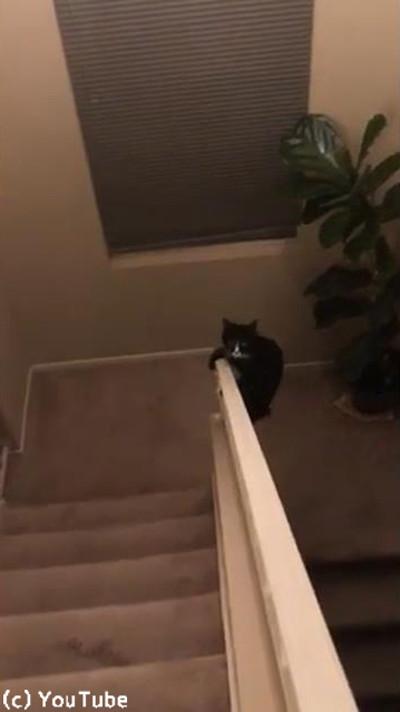 猫の身体能力ってやっぱりすごいなあ01