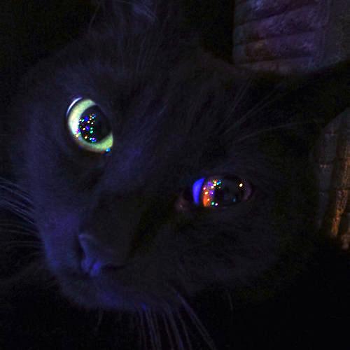 猫が狙っているもの01