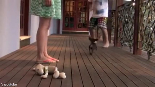 レディを守る小さな子犬08