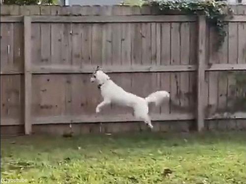 鹿のように飛び跳ねる犬00