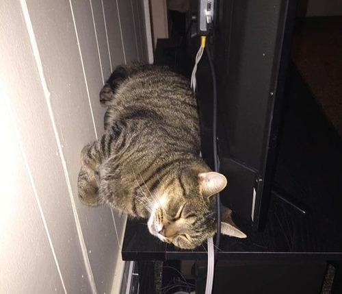 重力を無視する猫10