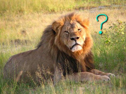 ライオンみたいなたてがみの猫たち00