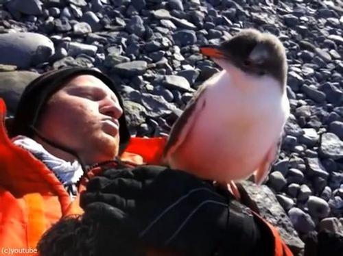 ペンギンのひなが乗ってきた01