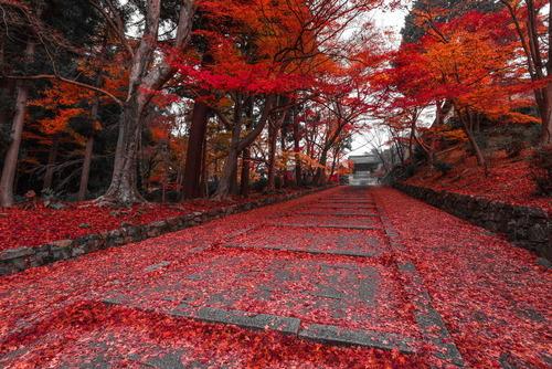 京都のレッドカーペット01