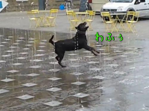 噴水に喜びを覚えてまった犬00