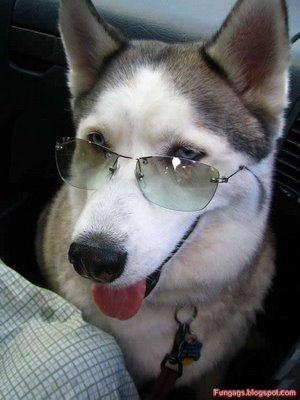 メガネ犬04