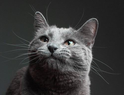 猫シッター04