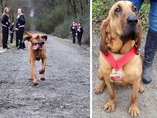 犬がハーフマラソンに飛び入り参加01