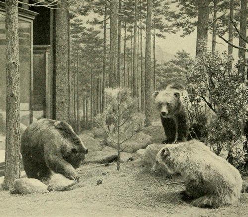 絶滅した動物09