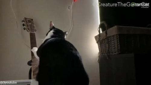 猫、飼い主を起こすために…01