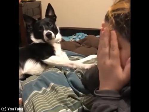 泣きまねをすると必死で慰めてくれる犬00