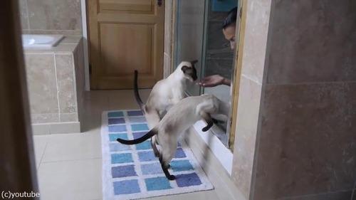 ご主人のシャワータイムに猫は…04