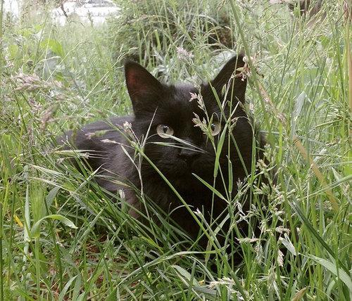 親友の猫を亡くした犬に新しい猫03