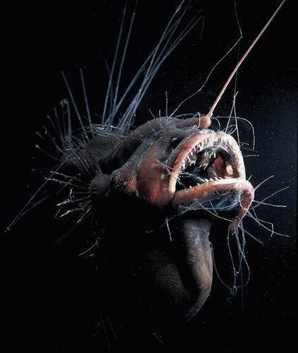 深海の生き物02