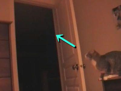 猫のジャンプ失敗