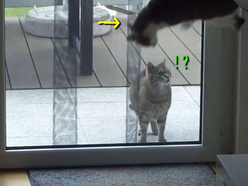 すごいポーズを見せつける猫00