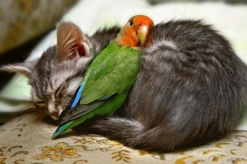 他の動物と仲良くする猫05
