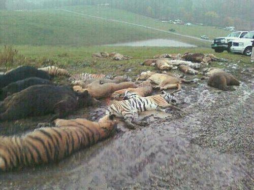 絶滅の危機にある動物が殺される01