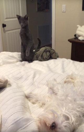二本足で立つ猫と、立たない犬05