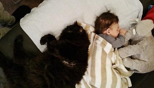 妊娠中から赤ちゃんを待っていた猫06