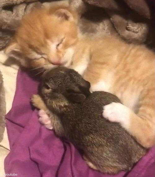 猫の赤ちゃん、ウサギの赤ちゃんを抱きしめる01