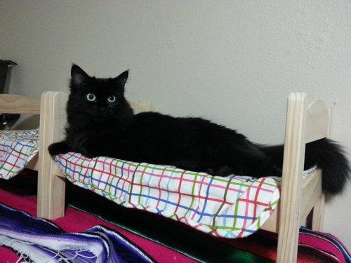 猫ベッド06