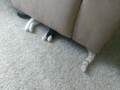密談する猫たち04