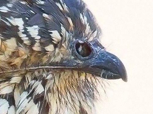 鳥に見えるクチバシ02