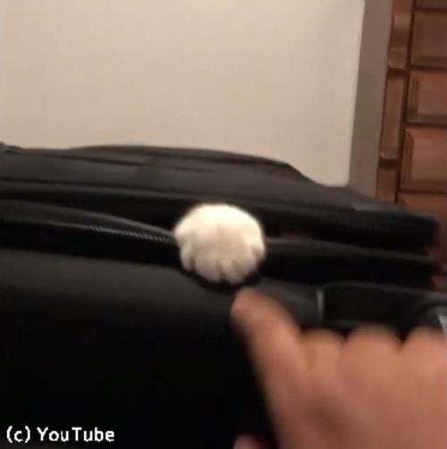 スーツケースを占拠する猫02