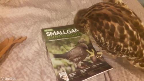 ペットに雑誌をあたえてみた01