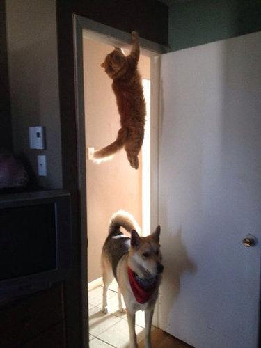 バランス猫17