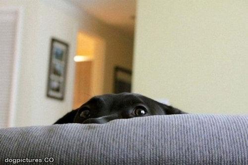 隠れるのが下手な犬たち19