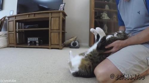 後ろに倒れる猫07