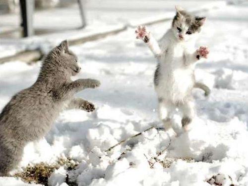 雪なんてへっちゃらな猫00