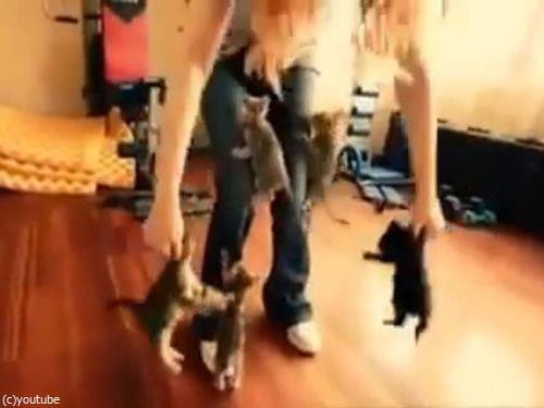 6匹の子猫06