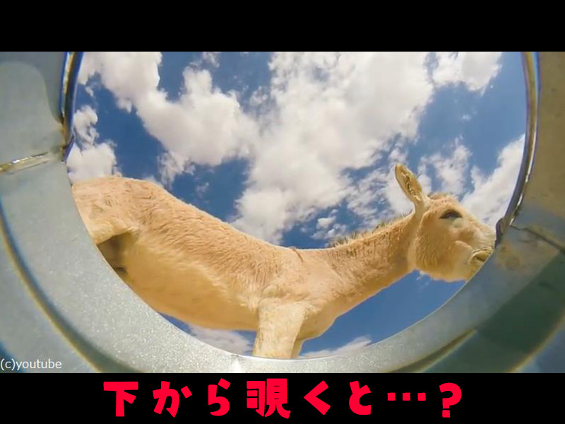 砂漠でバケツの中にカメラを仕掛けたら…動物たちのこんな映像が撮れた!(動画)