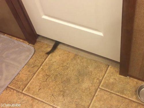 子猫がドアの下を通り抜ける07