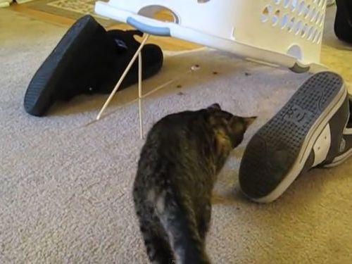 猫に原始的なトラップ01