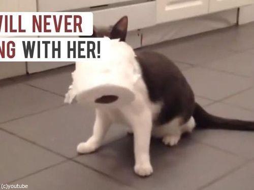 5人の飼い主に見捨てられた猫11