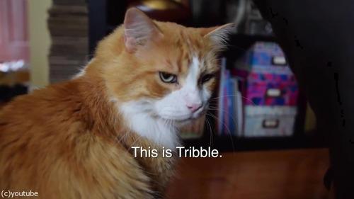 ソプラノボイスな猫のゴロゴロ01
