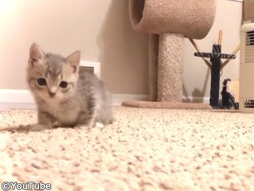カメラにおそるおそる近づく子猫00